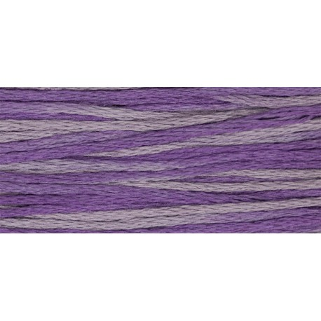 Iris - WDW 2316