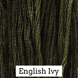 English Ivy - CC 179